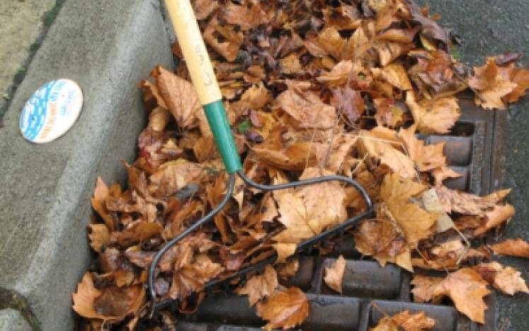Keeping Catch Basins Cleared